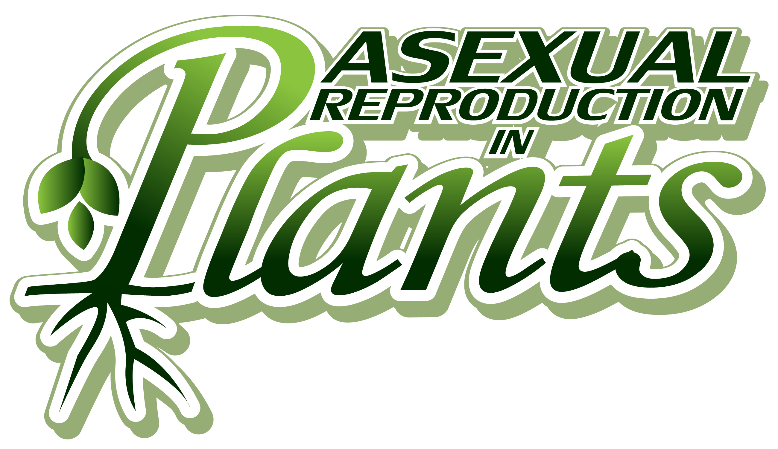 A sexual reproduction in plants